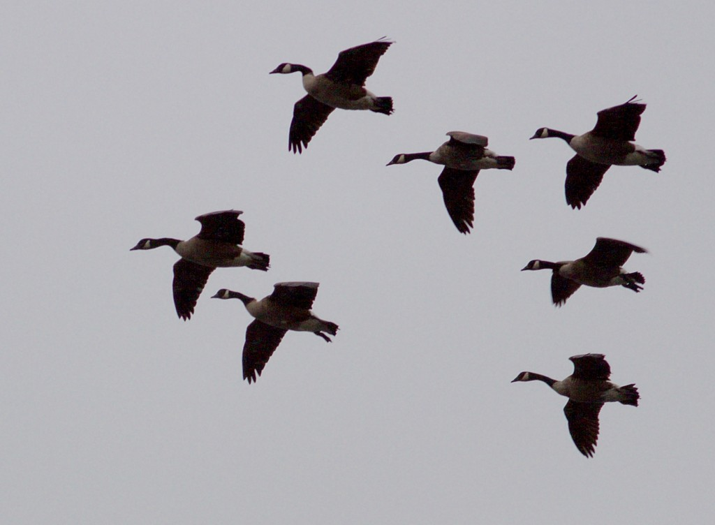 jack goose 5